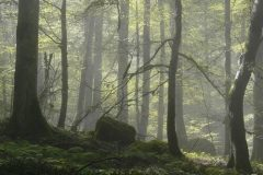 Bukvina šuma u Mazandaranu, Iran. Autor i © Fariba Babaei. Trajni URL: whc.unesco.org/en/documents/166783.
