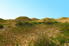 Tumul Madinat Hamad, Bahrain. Autor: Melanie Münzner. © Think Heritage. Trajni URL: whc.unesco.org/en/documents/166888.