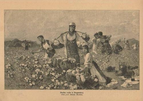 """Nikola Mašić. """"Berba ruža u Bugarskoj"""" (Rose picking in Bulgaria) (1890, published in the old Croatian journal """"Vienac: zabavi i pouci""""). Source: http://digitalna.nsk.hr/."""