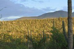 Meksička dolina Tehuacán-Cuicatlán. Autorica Diana Hernandez. © CHAC. Trajni URL: https://whc.unesco.org/en/documents/158051